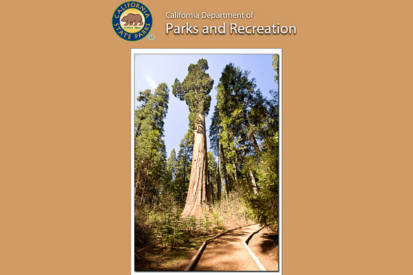 Big Trees California State Park