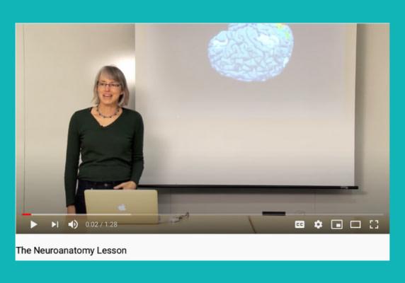 Nancy Kanwisher's Neuroanatomy Lesson